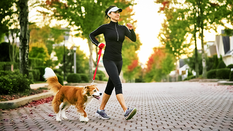 how your dog can help you walk 10000 steps a day