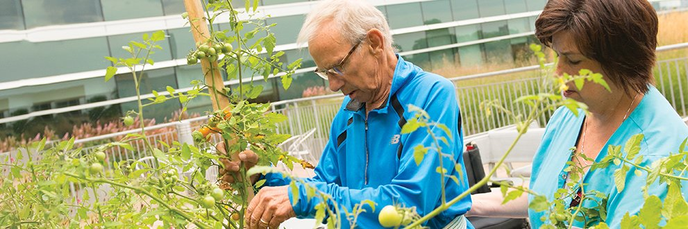 Rehabilitation patients plant, tend and harvest