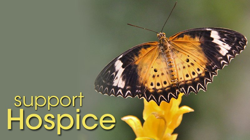 Support Hospice